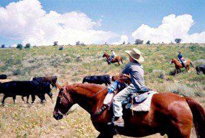 A Young Cowboy!