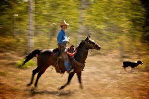 A cowboy and his dog at work