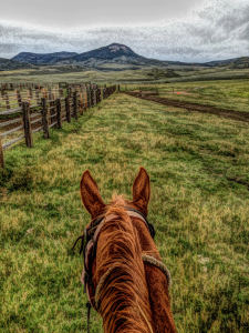 A Horse's Panoramic View