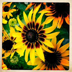 Sunflower Show